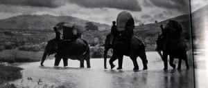 Elefanten - Die Geister der gelben Blätter - Bernatzik