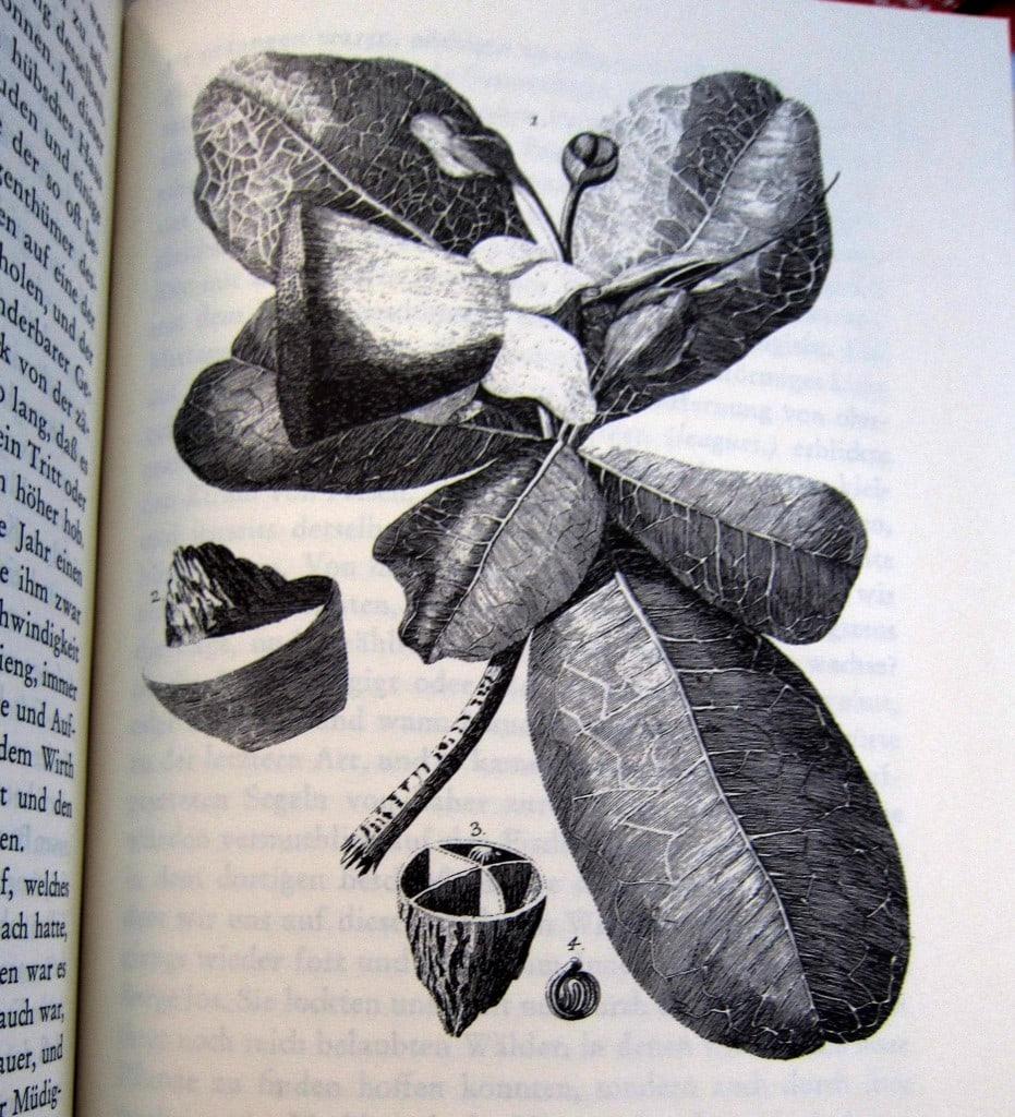Reise um die Welt - Georg Forster - Botanik