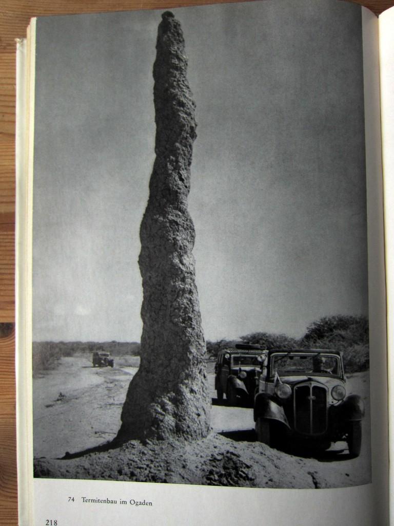 Termitenbau - Amba Ras - Hartlmaier