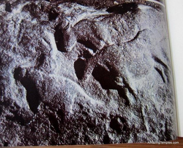 Rinder auf einem Steinblock - Fournier du diable