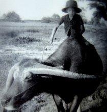 Mit dem Wasserbüffel auf dem Wege in die Reisfelder - Siam hinter dem Bambuswald