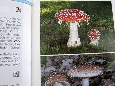 Pilze bestimmen - der große BLV Pilzführer für unterwegs
