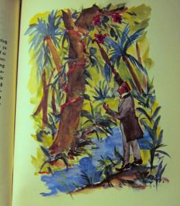Das Urwaldschiff - Dr. Schwarz pflückt eine Orchidee