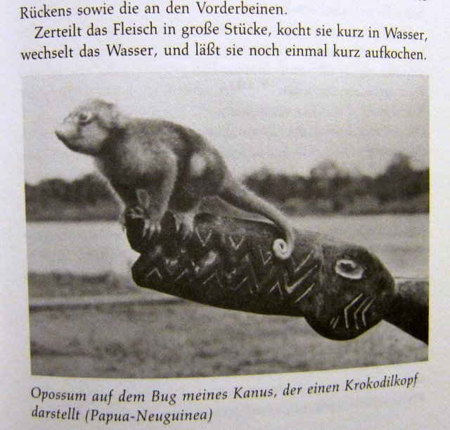 Opossum auf dem Bug des Bootes - Papua-Neuguinea Christina Dodwell - Globetrotter-Handbuch