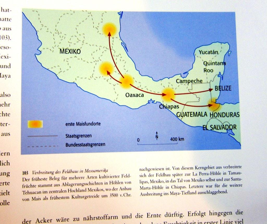 Maya - Gottkönige im Regenwald - Nikolai Grube - 4