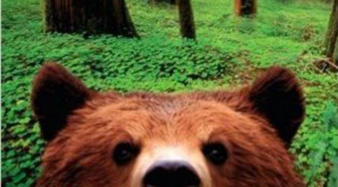 Picknick mit Bären – Bill Bryson