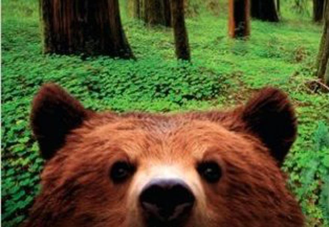 Titelseit von Picknick mit Bären