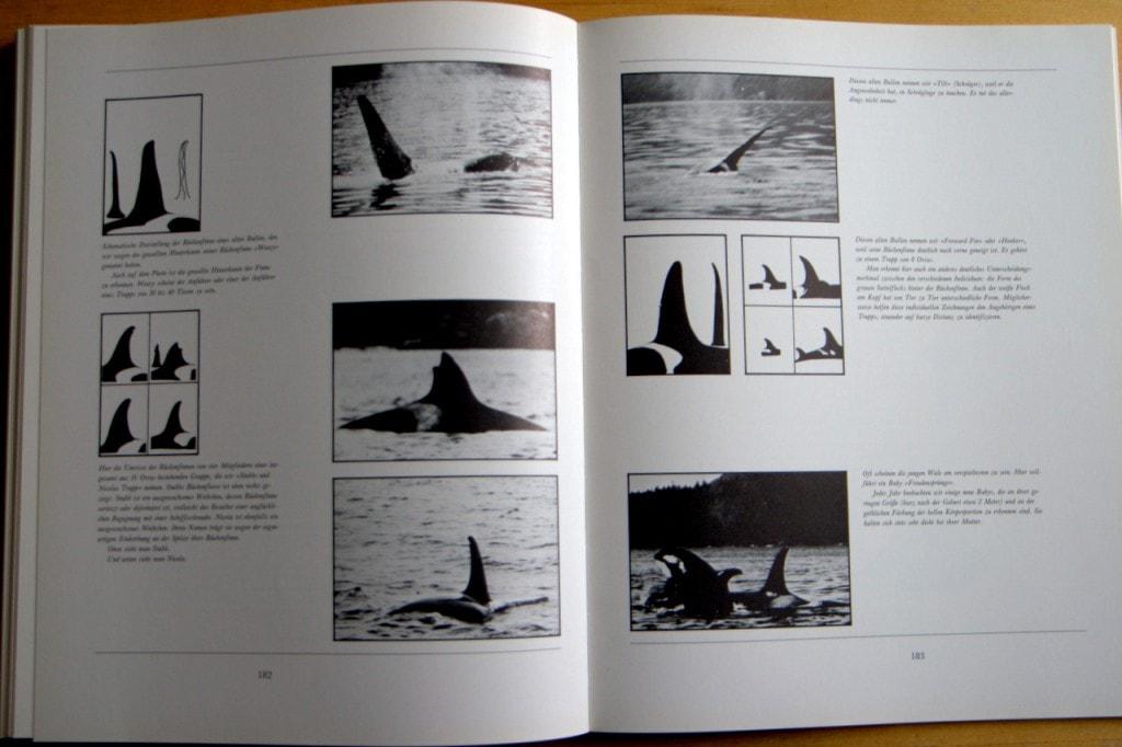 Der Geist in den Wassern - Rückenfinnen von Schwertwalen