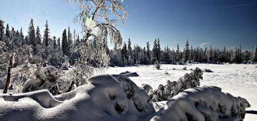 Winterlandschaft bei Moosbronn im Schwarzwald
